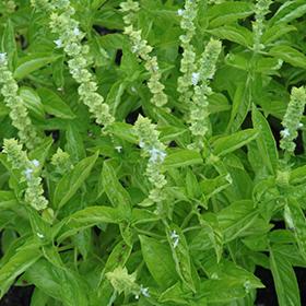 Plant Photo 8