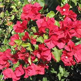 Plant Photo 6
