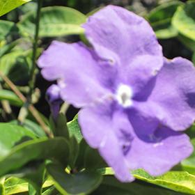 Plant Photo 7