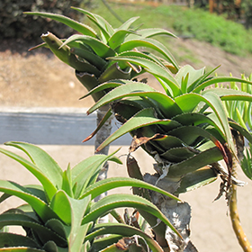 Plant Photo 10