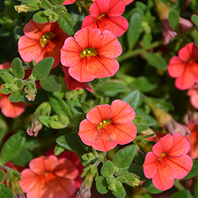 Plant Photo 2
