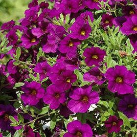 Plant Photo 1