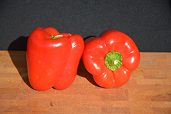 Big Red Sweet Pepper (Capsicum annuum 'Big Red') at Roger's Gardens