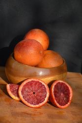 Moro Blood Orange (Citrus sinensis 'Moro') at Roger's Gardens