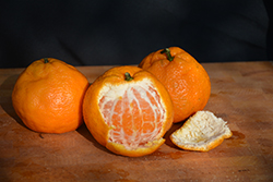 Satsuma Mandarin Orange (Citrus reticulata 'Satsuma') at Roger's Gardens