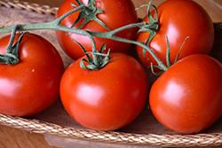 Bush Champion II Tomato (Solanum lycopersicum 'Bush Champion II') at Roger's Gardens