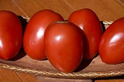 Picus Tomato (Solanum lycopersicum 'Picus') at Roger's Gardens