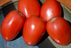 Amish Paste Tomato (Solanum lycopersicum 'Amish Paste') at Roger's Gardens