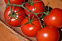 Jet Star Tomato (Solanum lycopersicum 'Jet Star') at Roger's Gardens