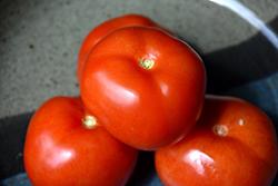 Homestead Tomato (Solanum lycopersicum 'Homestead') at Roger's Gardens
