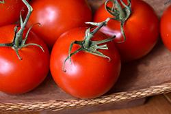 Red Racer Tomato (Solanum lycopersicum 'Red Racer') at Roger's Gardens