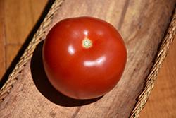 Mountain Fresh Tomato (Solanum lycopersicum 'Mountain Fresh') at Roger's Gardens