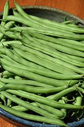 Snap Bean (Phaseolus vulgaris 'Snap') at Roger's Gardens