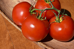 Sweet Cluster Tomato (Solanum lycopersicum 'Sweet Cluster') at Roger's Gardens