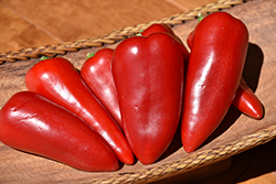 Lunchbox Red Sweet Pepper (Capsicum annuum 'Lunchbox Red') at Roger's Gardens