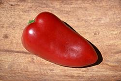 Sweet Heat Hot Pepper (Capsicum annuum 'Sweet Heat') at Roger's Gardens