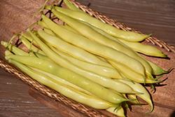Yellow Pole Bean (Phaseolus vulgaris 'Yellow Pole') at Roger's Gardens