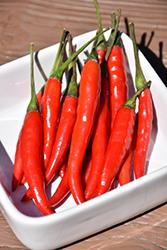 Thai Bird Pepper (Capsicum annuum 'Thai Bird') at Roger's Gardens