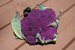 Graffiti Cauliflower (Brassica oleracea var. botrytis 'Graffiti') at Roger's Gardens