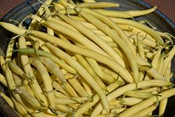 Golden Butterwax Bush Bean (Phaseolus vulgaris 'Golden Butterwax') at Roger's Gardens