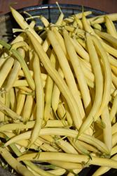 Kentucky Wonder Yellow Pole Bean (Phaseolus vulgaris 'Kentucky Wonder') at Roger's Gardens