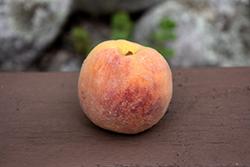Rio Oso Gem Peach (Prunus persica 'Rio Oso Gem') at Roger's Gardens