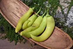 Banana Pepper (Capsicum annuum 'Banana') at Roger's Gardens