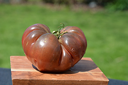 Heirloom Marriage Cherokee Carbon Tomato (Solanum lycopersicum 'Cherokee Carbon') at Roger's Gardens