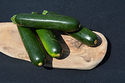 Spineless Perfection Zucchini (Cucurbita pepo var. cylindrica 'Spineless Perfection') at Roger's Gardens