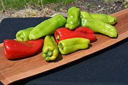Giant Aconcagua Pepper (Capsicum annuum 'Giant Aconcagua') at Roger's Gardens