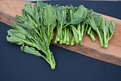 Gai Lan (Brassica oleracea var. alboglabra) at Roger's Gardens