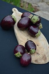 Pot Black Eggplant (Solanum melongena 'Pot Black') at Roger's Gardens