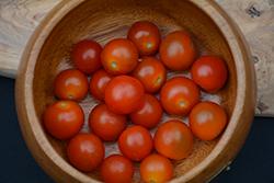 Totem Tomato (Solanum lycopersicum 'Totem') at Roger's Gardens