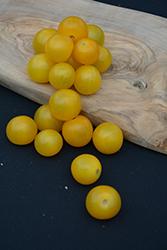 Sweet N' Neat Cherry Yellow Tomato (Solanum lycopersicum 'Sweet N' Neat Cherry Yellow') at Roger's Gardens