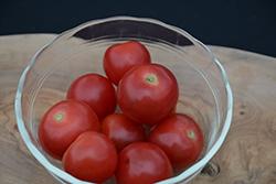 Husky Red Cherry Tomato (Solanum lycopersicum 'Husky Red Cherry') at Roger's Gardens
