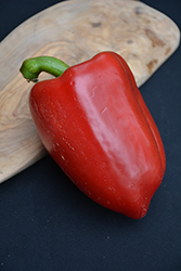 Red Beauty Pepper (Capsicum annuum 'Red Beauty') at Roger's Gardens