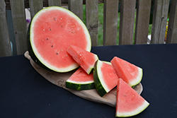 Cal Sweet Bush Watermelon (Citrullus lanatus 'Cal Sweet Bush') at Roger's Gardens