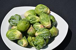 Royal Marvel Brussels Sprout (Brassica oleracea var. gemmifera 'Royal Marvel') at Roger's Gardens