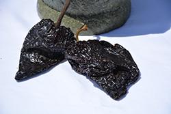 Mulato Isleno Pepper (Capsicum annuum 'Mulato Isleno') at Roger's Gardens