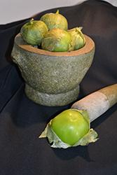 Grande Rio Verde Tomatillo (Physalis philadelphica 'Grande Rio Verde') at Roger's Gardens