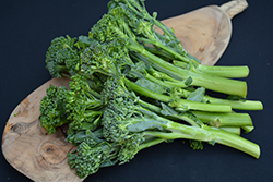 Aspabroc Broccolini (Brassica oleracea var. italica 'Aspabroc') at Roger's Gardens