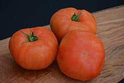 Classic Beefsteak Tomato (Solanum lycopersicum 'Beefsteak') at Roger's Gardens