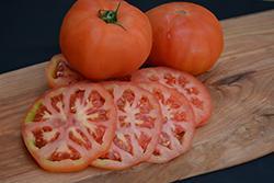 Beefmaster Tomato (Solanum lycopersicum 'Beefmaster') at Roger's Gardens