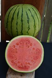 Mielhart Watermelon (Citrullus lanatus 'Mielhart') at Roger's Gardens
