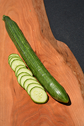 Tasty Green Cucumber (Cucumis sativus 'Tasty Green') at Roger's Gardens