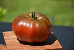 Black Krim Tomato (Solanum lycopersicum 'Black Krim') at Roger's Gardens