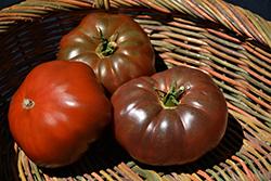 Cherokee Purple Tomato (Solanum lycopersicum 'Cherokee Purple') at Roger's Gardens
