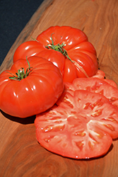 Giant Pink Belgium Tomato (Solanum lycopersicum 'Giant Pink Belgium') at Roger's Gardens