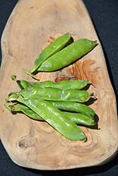 Sugar Ann Pea (Pisum sativum var. saccharatum 'Sugar Ann') at Roger's Gardens