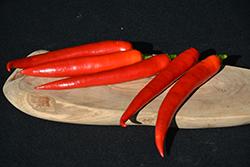 Romital Pepper (Capsicum annuum 'Romital') at Roger's Gardens